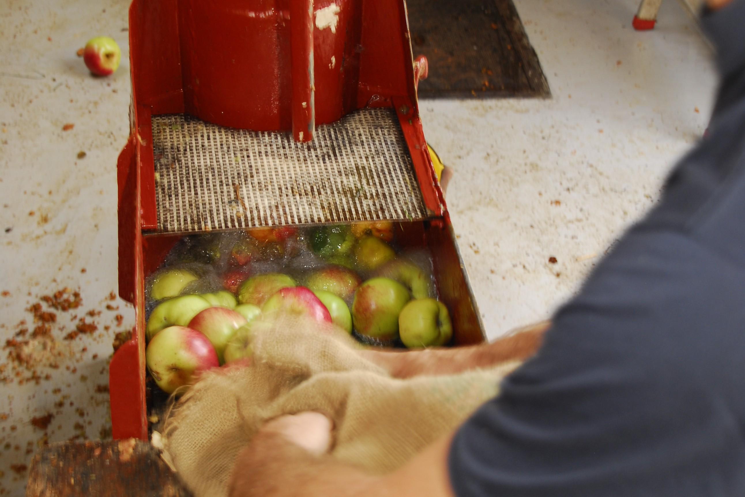 Lavage des pommes